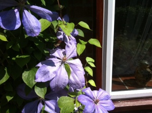 No relevance, just the big purple flower outside the house....