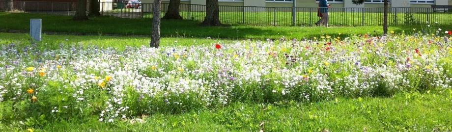 wild flowers on the roadside in central Brissol
