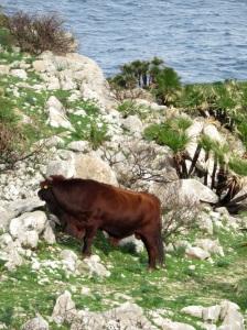 mmmm, big bull