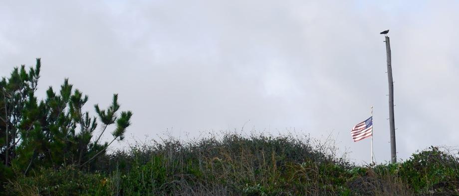 an osprey...